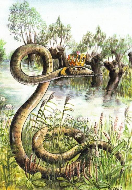 Der Schlangenkönig (L)